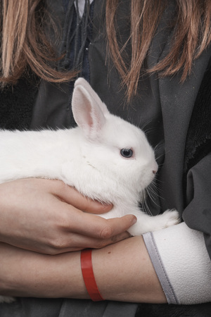 A white rabbit in a girls arms