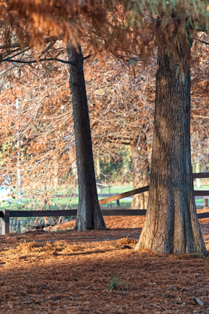 Autumn landscape of alberti in the park Imagens - 120091243