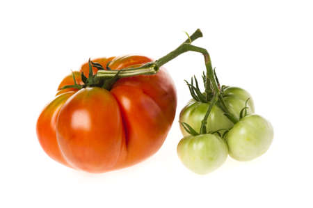 misshapen: Large ripe red heirloom tomato in the same bunch as three small unripe green ones   Isolated on white  Stock Photo