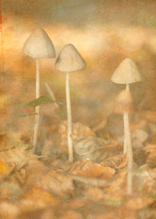 notelet: Illustration with soft vintage textured look of  toadstools among autumn fallen leaves