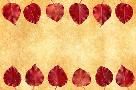 room for text: Red autumn  leaves along the  border of an antique textured card with room for text Stock Photo