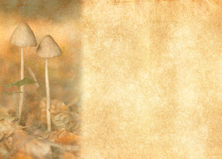 notelet: Delicate and soft illustration of autumn toadstools growing from autumn leaves.  With an antique look on a textured brown and beige background.  Room for text.