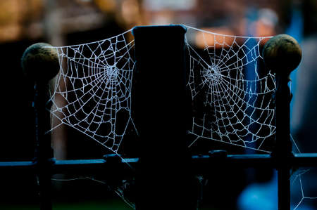 Two spiders webs on fence posts covered by ice crystals from frozen dew.  Backlit in the early morning glowing against a dark background. photo
