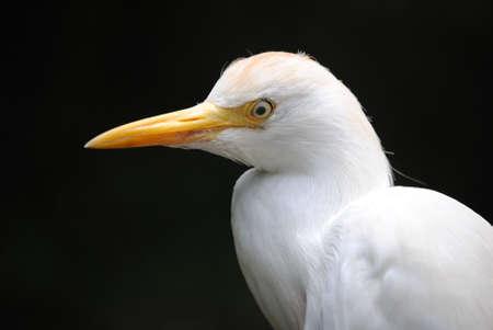 Egret Bird Imagens