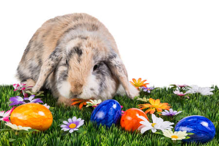Colorful rabbit with easter eggs on flower meadow in landscape format photo