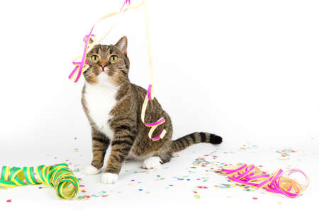 party streamers: party streamers for the cat