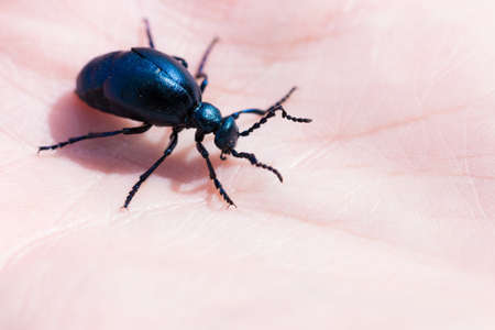 big beetle climbing of the hand of a person Stock Photo