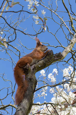 verifiable: squirrel sitting in the branches of a tree Stock Photo