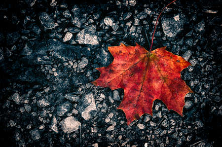 dark stone ground background with autumn leaf lying on the street