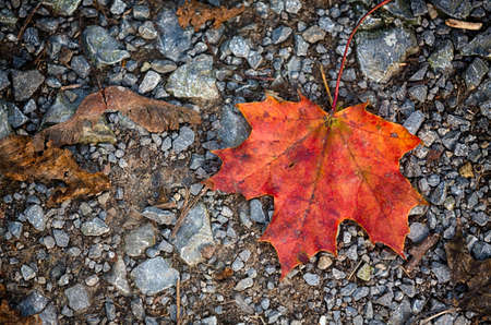 autumn leaf lying on the street Stock Photo - 40887779