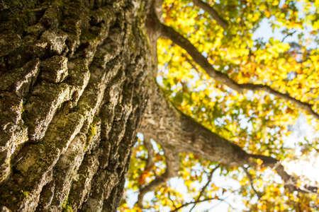lusty: tree trunk in case