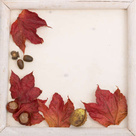 autumn motif: fall leaves decorated with wooden frame