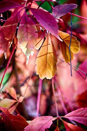 reddish: lovely view of reddish autumn leaves