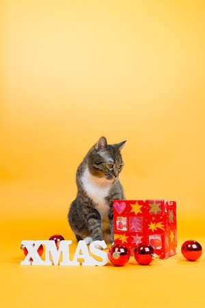 chritmas: brown tiger cat laying on the ground with some chritmas decoration Stock Photo