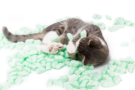 little gray tiger cat playing with packing chips