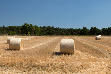round bales on a mowed field with wood and blue sky in the background photographed with wide-angle lens Stok Fotoğraf