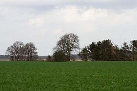 Wide angle view on a grassland with trees at the horizon photographed during a walk in the nature in the north west of germany with wide angle lens 版權商用圖片