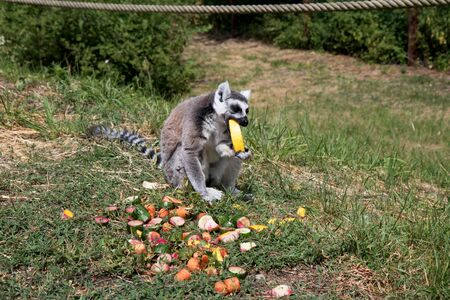 Side view of a young man eating a melon and holding his hands at the zoo in germany photographed during a walk through the zoo in germany Imagens