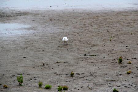 View on the watt with bird on the northern sea island