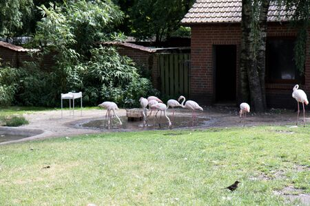 A group of flamingos in their area at a zoo in germany photographed on a sunny day in multi colored