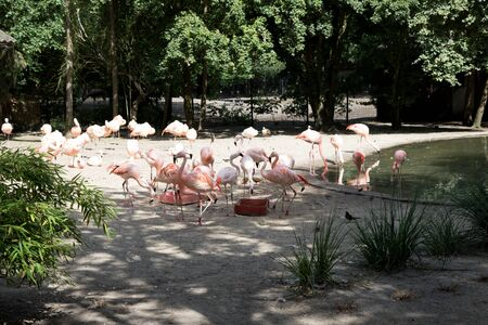 A group of pink flamingos at a zoo in germany photographed on a sunny day in multi colored