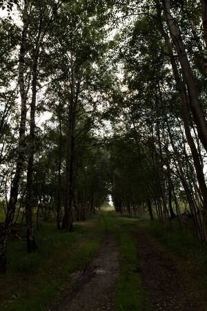 View on a footpath in Herzlake Emsland Germany photographed on a walk through the moor on a sunny day Stockfoto