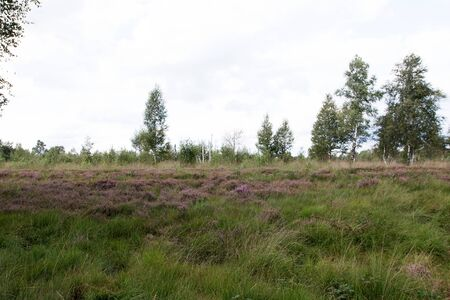 View on a field with pagan in the moor in Herzlake Emsland Germany on a walk through the moor on a sunny day Stockfoto
