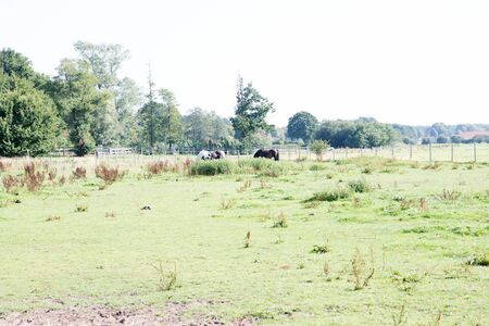 Distant view on a field with two horses in laten emsland germany photographed during a walk in the nature on a sunny day