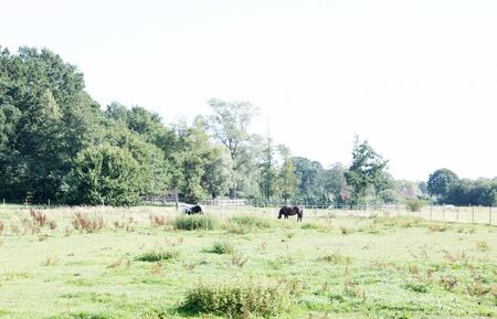 Closer view on a field with two horses in laten emsland germany photographed during a walk in the nature on a sunny day Stockfoto