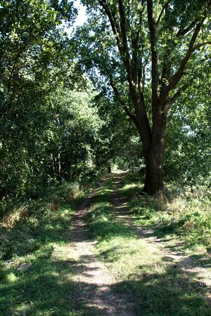 View on footpath in laten emsland germany photographed during a walk in the nature on a sunny day