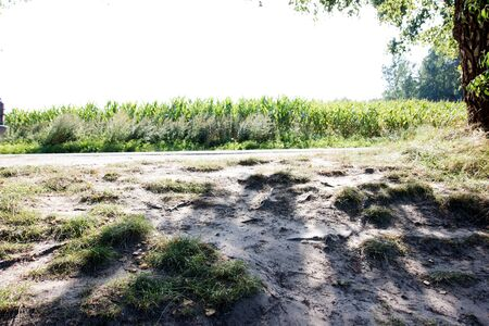 View on a sand hill and corn field in lathen emsland germany photographed during a walk in the nature on a sunny day