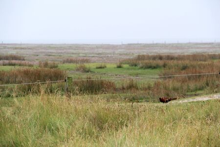 Distant view of a beautiful landscape on the northern sea island Stockfoto