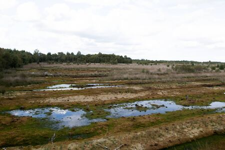 Distant view on a moor landscape with water puddles in germany