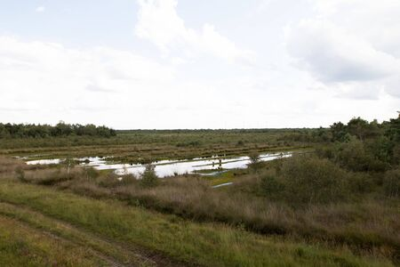 Distant view on a bog grass area with water puddles in germany