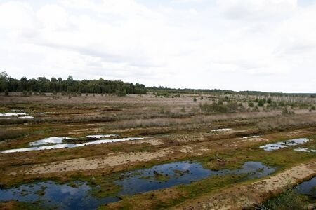Distant view on a moor landscape with water puddles and trees in germany