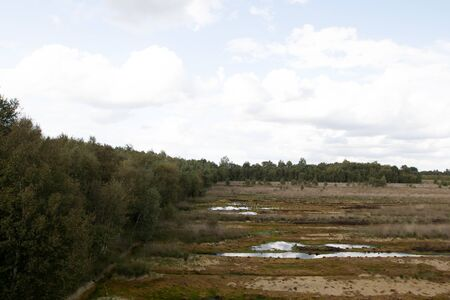 Distant view on a moor landscape with water puddles and trees under a blue sky in germany Stockfoto