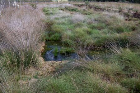 View on water in a grass area in a moor in germany Stockfoto