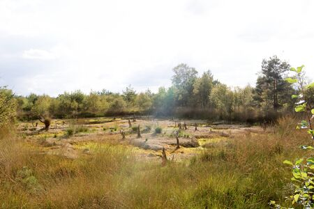View on a bog landscape with sunlight in germany Stockfoto - 133146191