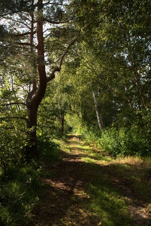 View on a path surrounded by trees in germany Stockfoto