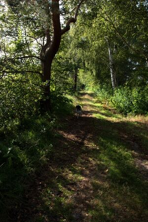 View on a tree and a running dog surrounded by trees in germany Stockfoto