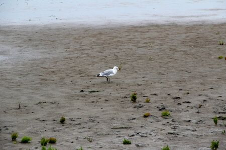 View on a gull on a beach at the northern sea island juist germany Stockfoto