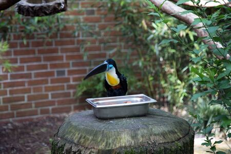 View on a colorful bird sitting on a stone in a park in Germany Stockfoto