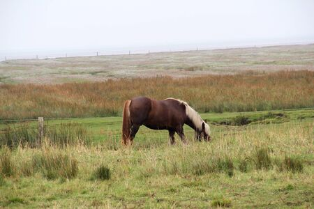 Closer view on a horse at the northern sea island juist germany