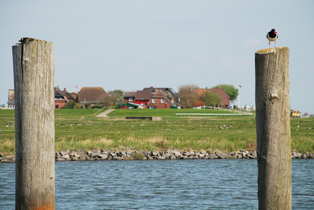 german north sea region: Hallig Hooge, Germany. The Halligen (singular Hallig) are ten small German islands without protective dikes in the North Frisian Islands on Schleswig-Holsteins Wadden Sea-North Sea coast in the district of Nordfriesland Stock Photo