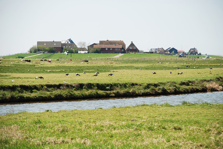 Dwellings on the Warft on the Hallig Hooge in north Friesland. The Halligen (singular Hallig) are ten small German islands without protective dikes in the North Frisian Islands on Schleswig-Holstein's Wadden Sea-North Sea coast in the district of Nordfriesland Archivio Fotografico