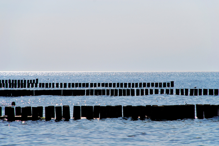 Coast protection at the baltic sea (Darss, Western beach, Germany): groynes.  In the ocean, groynes create beaches or prevent them being washed away by longshore drift. Standard-Bild - 114259945