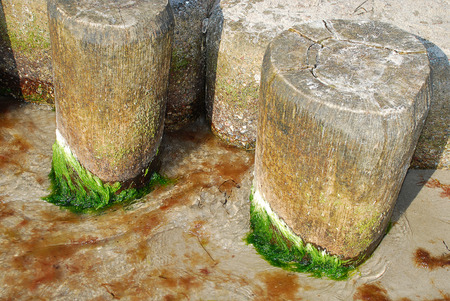 Coast protection at the baltic sea (Darss, Western beach, Germany): groynes. In the ocean, groynes create beaches or prevent them being washed away by longshore drift. Standard-Bild - 114259623