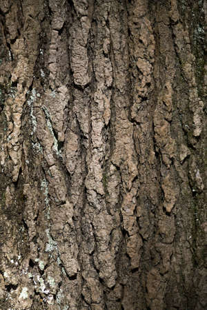 image created 21st century: Bark of a tree with a beautiful light Stock Photo