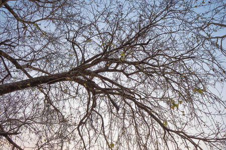 dilate: branch of tree will dilated untill have someones cut down its, but when the time was passed it will dilate again.