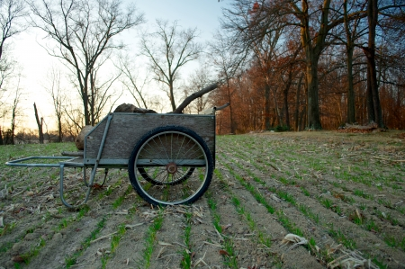 A wheel barrel sitting in the middle of a field of rows